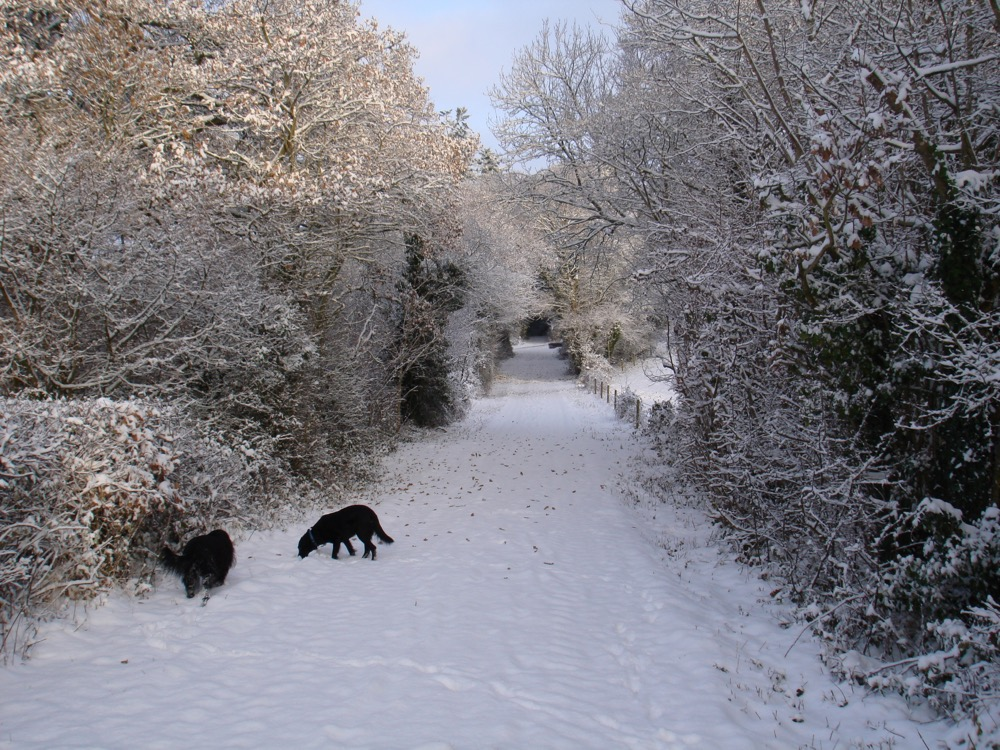 winter around the village 2011 c.jpg